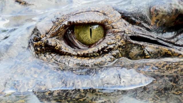 vídeos de stock e filmes b-roll de close up of crocodile eye - arcaico