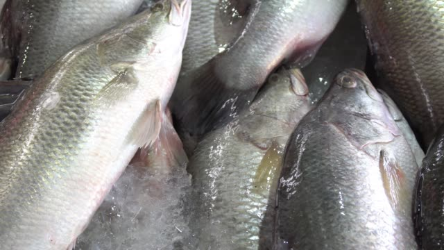 close up of dead giant sea perch fish on ice in stall at the market with dolly shot - seafood stock videos & royalty-free footage