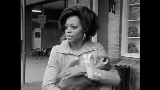 Close up of Diana Ross cuddling a baby Joey kangaroo asks about its age / Ross crouching down to the Joey Joey tries to jump away she picks it up and...