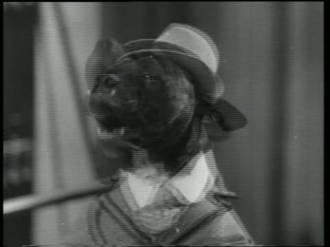 B/W 1930 close up of dog in suit + hat talking / Dogway Melody
