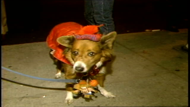 vidéos et rushes de close up of dog in vest and hat and a hand holding mic up to its mouth - 1985