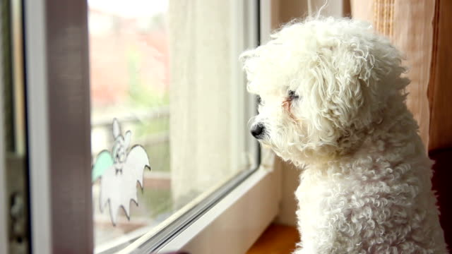 close up of dog looking out the window -