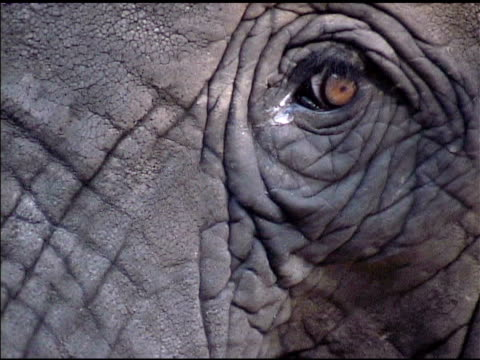 close up of elephant eye 1 - one animal stock videos & royalty-free footage