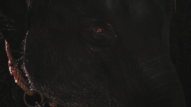 close up of eye elephant - captive animals stock videos & royalty-free footage