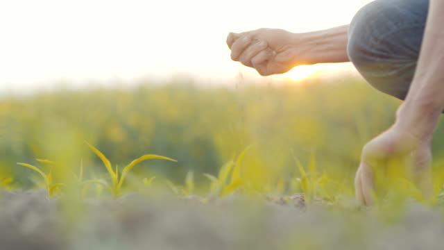 Närbild av jordbrukaren händer att undersöka marken. JORDBRUK.