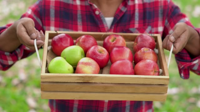 close up of farmer holding apple basket. - apple fruit stock videos & royalty-free footage
