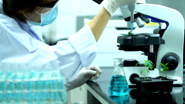 close up of female botanist with white protective suit using pipette droplet chemical substance at young plant during examing plants in the laboratory - mikrobiologie stock-videos und b-roll-filmmaterial
