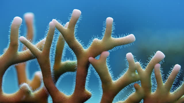 close up of fire coral on red sea reef - coral stock videos & royalty-free footage