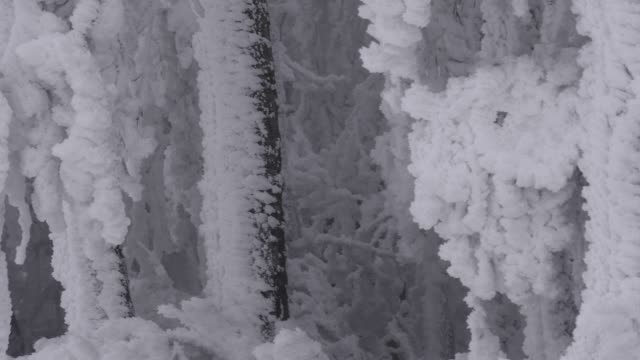 nahaufnahme von gefrorenen äste, extrem kalten tempertures, schöne formen und formen, stifte, gebeugt von bäumen bedeckt einfrieren - zweig stock-videos und b-roll-filmmaterial