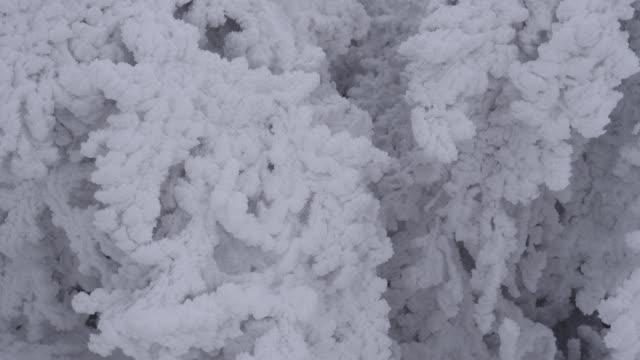 stockvideo's en b-roll-footage met close-up van bevroren boomtakken, extreem koude tempertures, prachtige vormen en vormen, bevriezing pinnen, gebogen over bomen, bewolkt - twijg