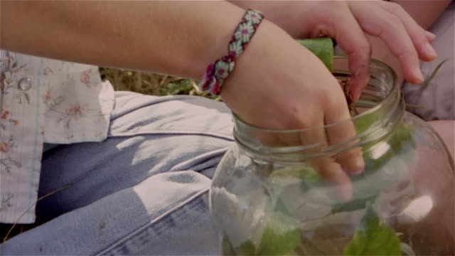 close up of girl taking pet stick bug out of jar and putting on boy's arm - walking stick stock videos & royalty-free footage