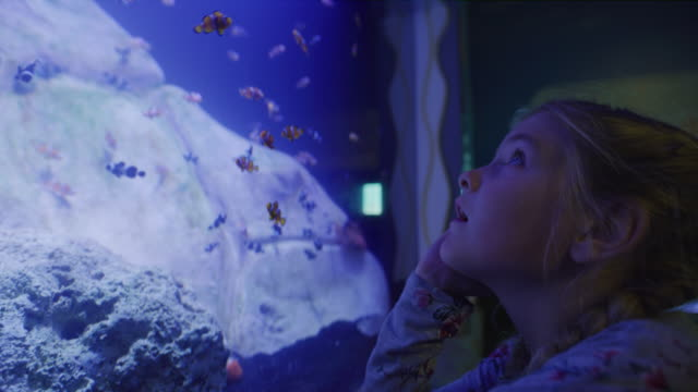 close up of girl watching fish swimming in aquarium / draper, utah, united states - 水族館点の映像素材/bロール