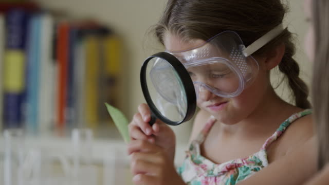close up of girls examining leaf and test tube with magnifying glass / orem, utah, united states - looking through an object stock videos and b-roll footage