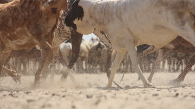 close up of goats running past - goat stock videos and b-roll footage