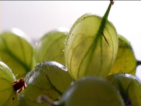 close up of gooseberries - einige gegenstände mittelgroße ansammlung stock-videos und b-roll-filmmaterial