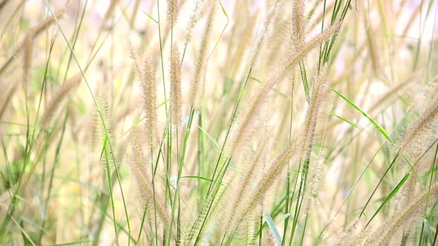 close up of grass flower - depth marker stock videos & royalty-free footage