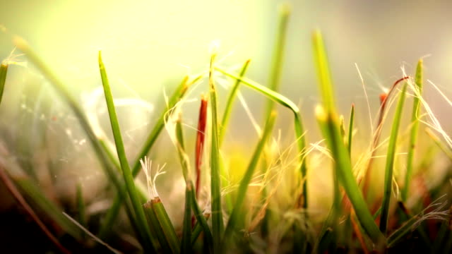 close up of grass in wind. hd - blade of grass stock videos and b-roll footage