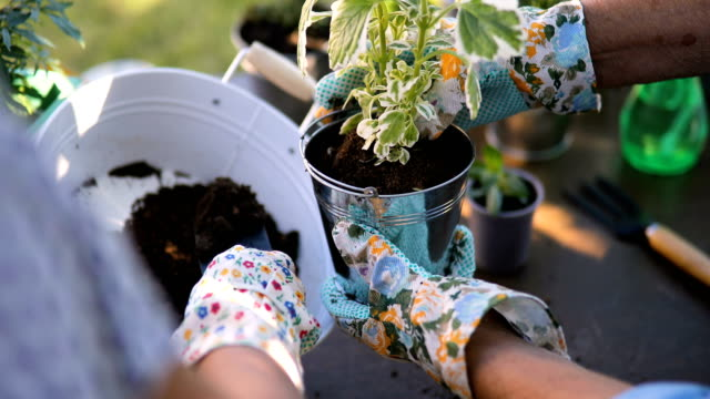 close up of hands senior and middle-aged woman planting flowers in the yard - giardinaggio video stock e b–roll