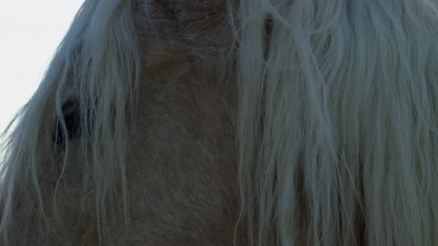 close up of head of wild horse - animal hair stock videos & royalty-free footage