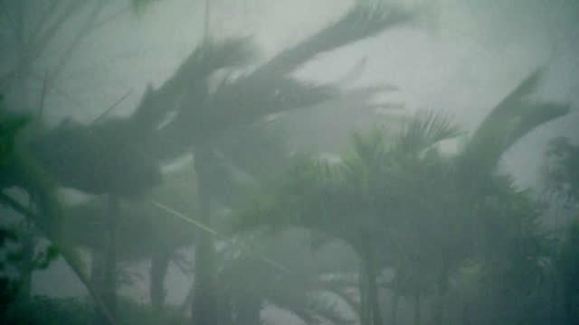 close up of heavy rain and wind during hurricane maria in san juan, puerto rico. - palm tree stock videos & royalty-free footage