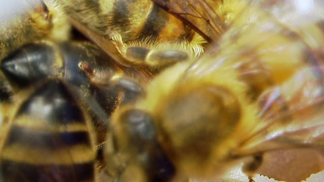 close up of honey bees in the hive - pollen stock videos & royalty-free footage