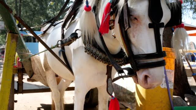 vídeos de stock e filmes b-roll de close up of horse taxi at the streets of gili travangan in gili island - bali