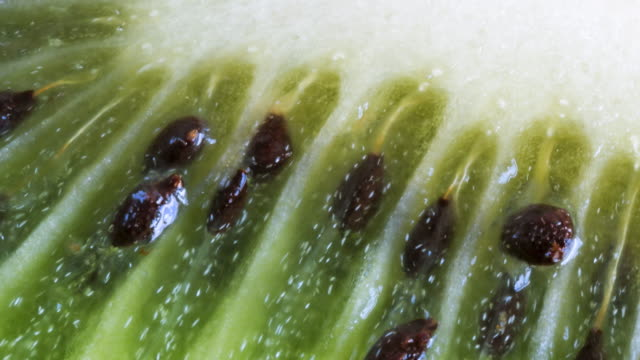 close up of kiwifruit interior pulp and seeds. beautiful texture and pattern in the healthy eating fruit - vitamin a nutrient stock videos and b-roll footage