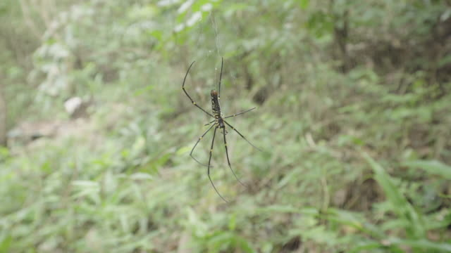 close up of large spider in thailand jungle - arachnophobia stock videos & royalty-free footage