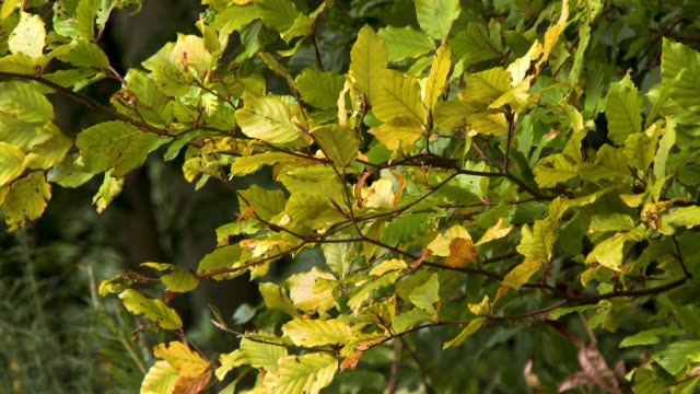 close up of leaves on a branch blowing in the wind - johnfscott stock videos & royalty-free footage
