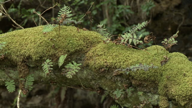 close up of moss and ferns on a branch - moss stock videos & royalty-free footage
