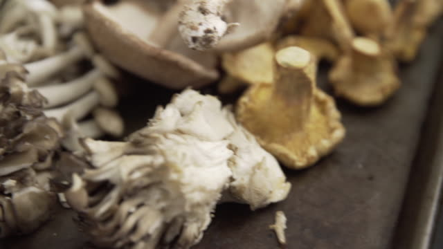 close up of mushrooms - eating utensil stock videos and b-roll footage