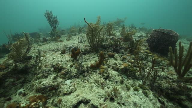 close up of ocean floor, underwater shot - reef stock videos & royalty-free footage