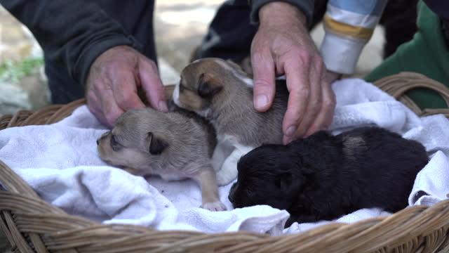 vídeos y material grabado en eventos de stock de de cerca de las manos de anciano mientras juega con cachorros en el patio trasero - small group of animals