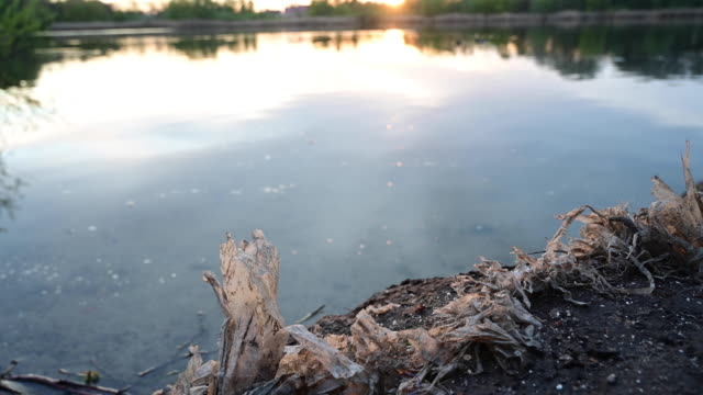 close up of old plastic on the shore of a lake at sunset. pan movement. germany. - seeufer stock-videos und b-roll-filmmaterial