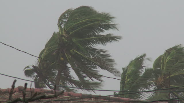 close up of palm trees blown by strong typhoon winds. super typhoon megi or juan, ne luzon, philippines oct 2010 / audio - record breaking stock videos & royalty-free footage