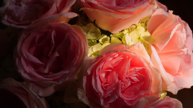 close up of pink roses with dappled light on bunch - dappled light stock videos and b-roll footage