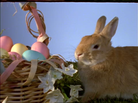 close up of rabbit next to easter basket with colored eggs - osterhase stock-videos und b-roll-filmmaterial