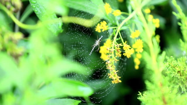 close up of raindrops and spider on spider web with flower - spider flower stock videos & royalty-free footage
