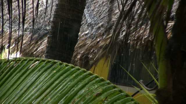close up of raindrops falling on palm trees and a thatched roof in the tropics. - thatched roof stock videos and b-roll footage
