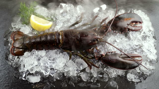 4k uhd: close up of raw canadian lobster with lemon and dill on frozen ice on black plate with flow of frozen icy smoke. fresh luxury seafood and menu recipes retail market concept. - crustacean stock videos & royalty-free footage