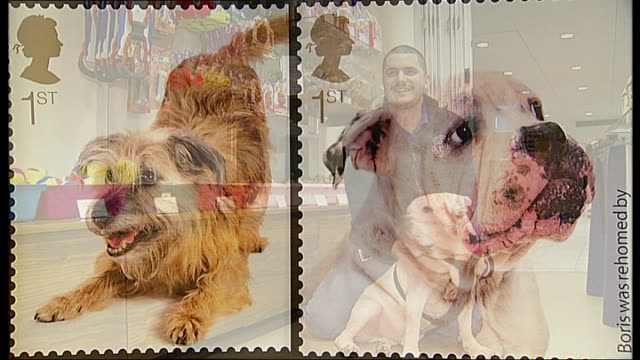 vídeos de stock, filmes e b-roll de close up of royal mail stamp featuring cat close ups of royal mail stamps featuring two dogs paddy brown interview as stroking dog sot - selo postal