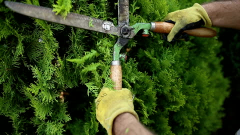 close up of scissors and man who pruning a tree - pruning stock videos & royalty-free footage