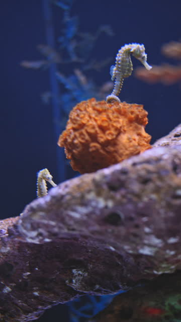 close up of sea horse underwater - mollusk stock videos & royalty-free footage