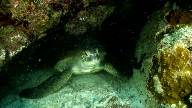 close up of sea turtle under reef - green turtle stock videos & royalty-free footage