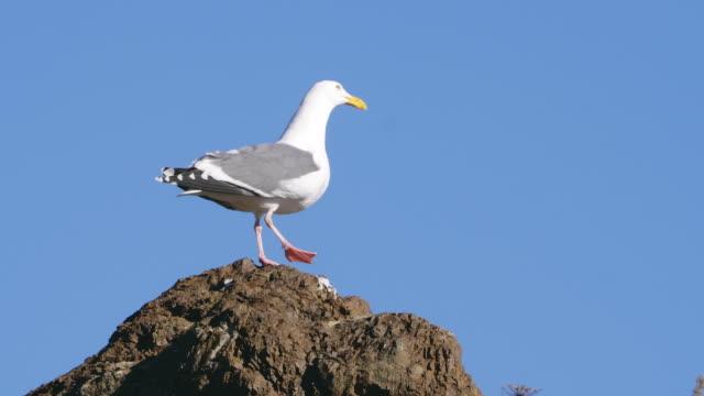 Nahaufnahme von Seagull