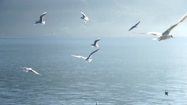 close up of seagulls flying near a lake with mountains - bird stock videos & royalty-free footage