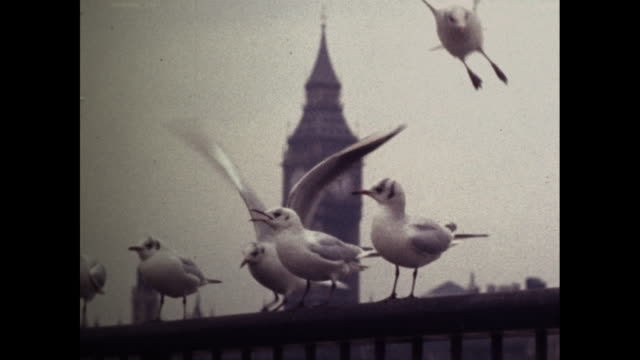 close up of seagulls with big ben in the background. - bird stock videos & royalty-free footage