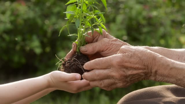 close up of senior hands giving small plant to a child - planting stock videos & royalty-free footage