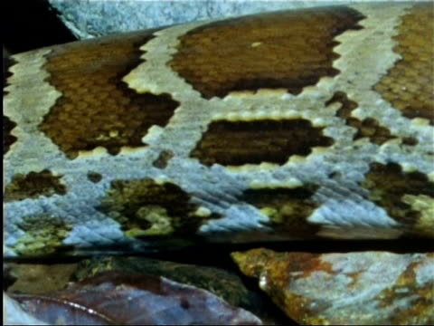close up of snake entering water in indian rainforest - animal colour stock videos & royalty-free footage