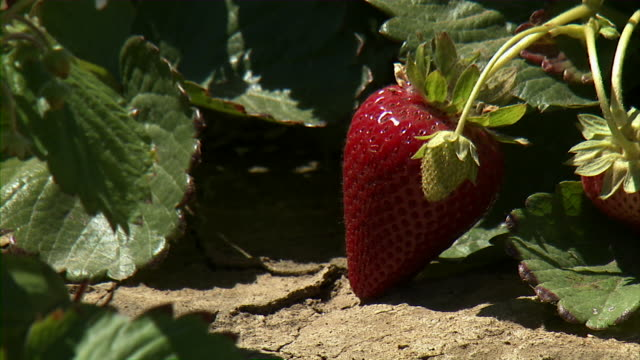 stockvideo's en b-roll-footage met close up of strawberry. - sappig
